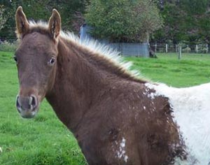 Skip's Supreme filly