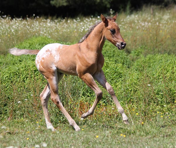 Filly by Skip's Supreme out of Cayuse Scratch Me First