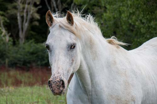 Appaloosa mare Momentarily Zipped